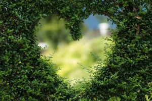 Plant-based: Heart in a wall of plants