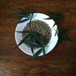 Hemp seeds used to make hemp protein