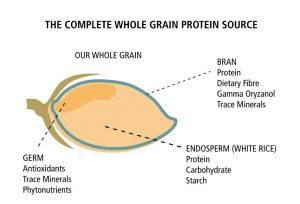 Oryzatein whole grain brown rice, found in Performance Lab SPORT Protein, the best vegan protein powder